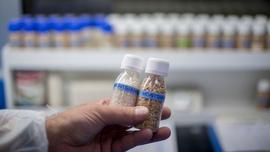 Łuski ryżowe zastąpią w przemyśle motoryzacyjnym plastik?